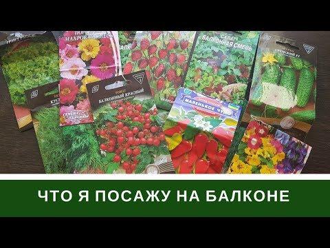 Что Я Посажу На Балконе: Обзор Семян