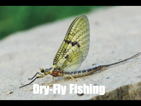 Green Drake Hatch-Dry Fly Fishing 2017