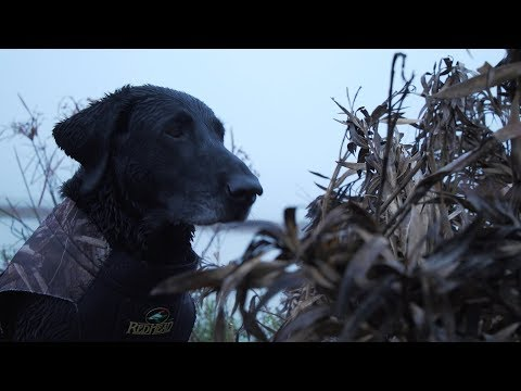Retrieving Dogs, Ruby The Retriever - Texas Parks & Wildlife [Official]