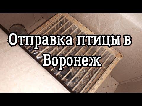 Отправка птицы в Воронеж