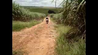 Trilha de moto XLX 350 R - Motocross