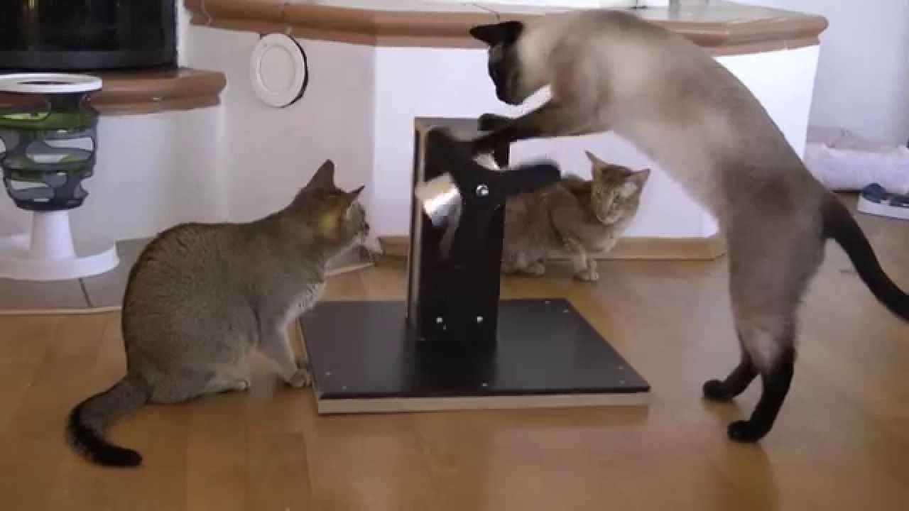 Spielzeug für katzen youtube