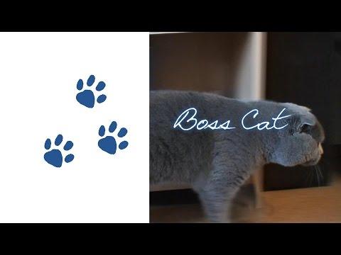 Boss Cat – Fail Of The Year
