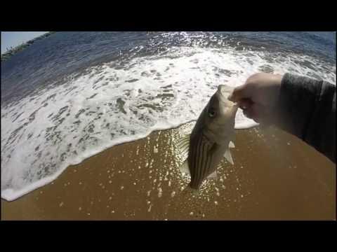 Surf Fishing On Plum Island Part 1