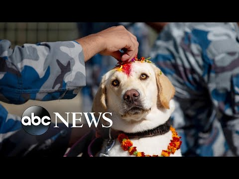 Dog worship day, Tiger Woods and California fires: World in Photos, Oct. 28