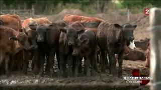 La vérité sur le bœuf Argentin.......