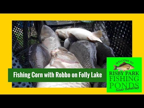 How To Fish Corn On The Inside Line For 80lb+ Catches With Robbo At Risby Park Fishing Ponds