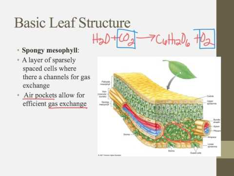IB Biology Notes Chapter 9.1