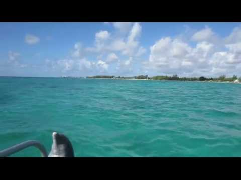 Bahamas Freeport Dolphin Open Ocean Water swim Xuma and Rabolo doing tricks