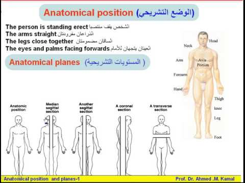 04 Anatomical Terms 1 Anatomical Position Planes Anatomy Intro Dr