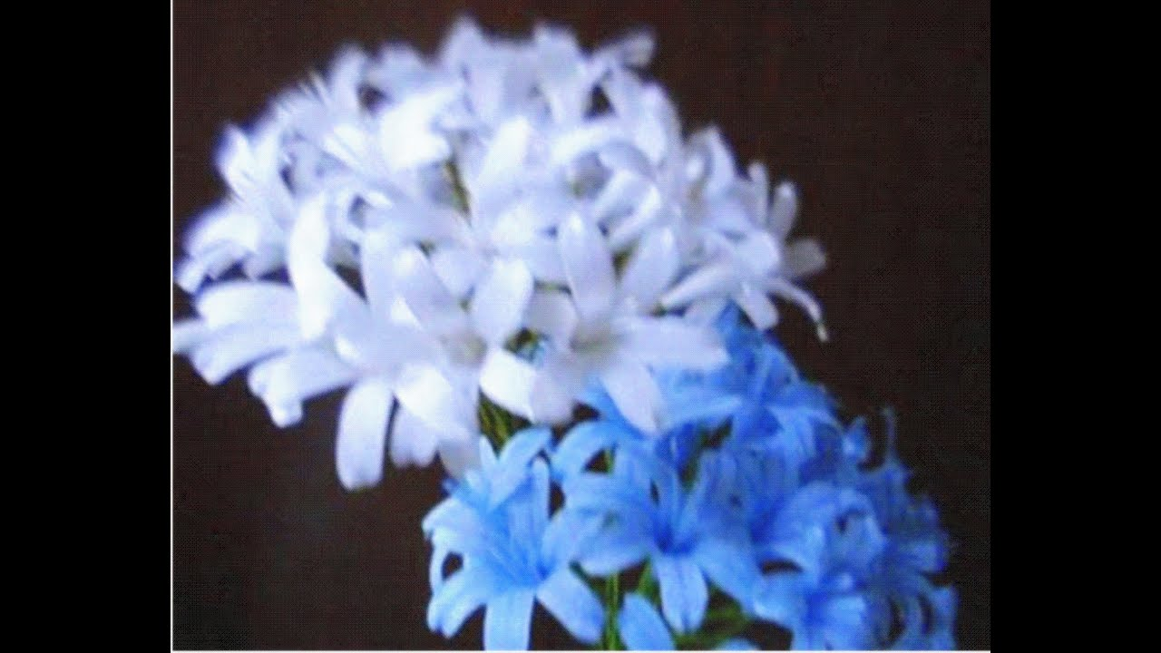 How to make paper flowers agapanthus lily of the nile flower 48 how to make paper flowers agapanthus lily of the nile flower 48 youtube izmirmasajfo