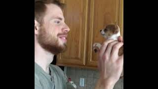 Tiny puppy named Bentley says no to kisses!