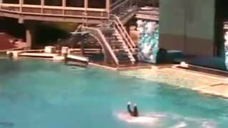 Killer Whale Attacks at Sea World! UNCUT VIDEO!!!!!(With the latest attack at Sea World these beauiftul smart creatures should be back in the waters free with no tank. This is all for money not for the education of ..., 2010-02-27T20:31:10.000Z)