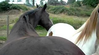 Ass Kissing 2 horses ...Green Acres Boarding Lincoln city Oregon