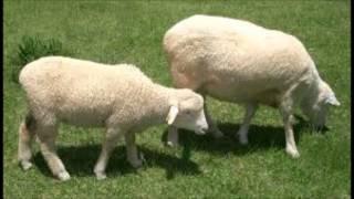 usenで流れている羊の数の終わりの部分になります.