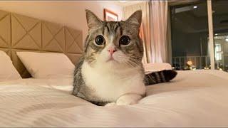 猫と一緒に高級ホテルで一泊したら幸せすぎました…笑