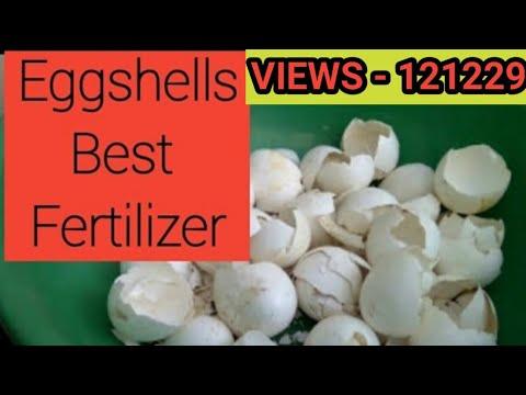 How to make EGGSHELL organic fertilizer as Calcium, Potassium, Phosphorus & more in(Hindi and Urdu)