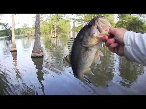 Santee Bass Fishing