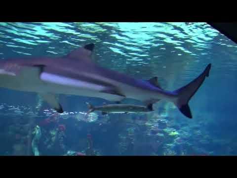 Zoo-Aquarium Berlin 1080p 2D