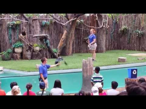 The Bird Show at the Dallas Zoo 2014