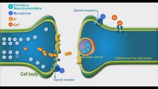 Opioids animation video
