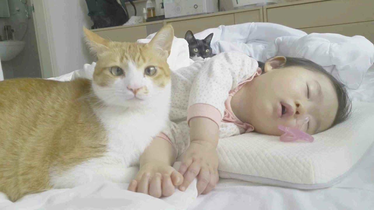 아기와 고양이들이 잠자는 모습ㅣ힐링 수면유도영상ㅣ잠이 안 온다면 보세요 :)