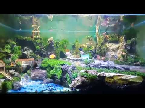 Aquascape tema jalan tampa co2 part 2 - YouTube
