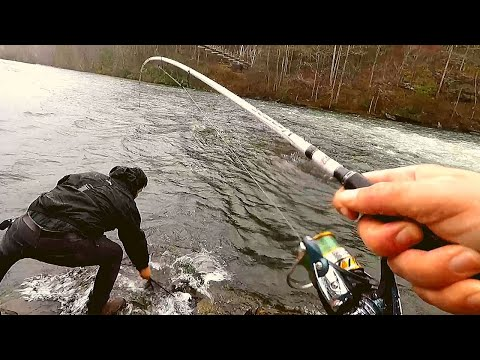 Big Brown Trout On Hellgrammite Lure (with Everyday Angler)