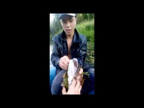 Fishing In Altai Siberia Russia