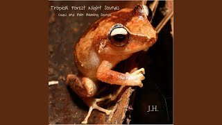 Tropical Forest Night Sounds: Coqui and Rain Relaxing Sounds