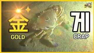 동해해루질 ( 깨다시꽃게 ㅣ 금게 ㅣ 뿔소라 ㅣ등등 )