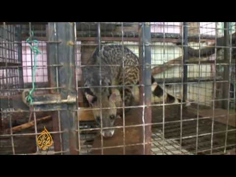 Wildlife for sale at Malaysia zoos