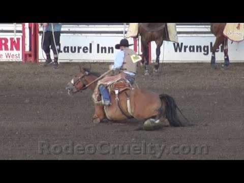 Rodeo Horse, Leg Broken, Forced to Run
