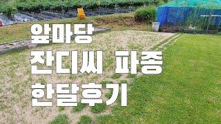A/S 영상. 앞마당 잔디씨 뿌린거 어떻게 되었을까?