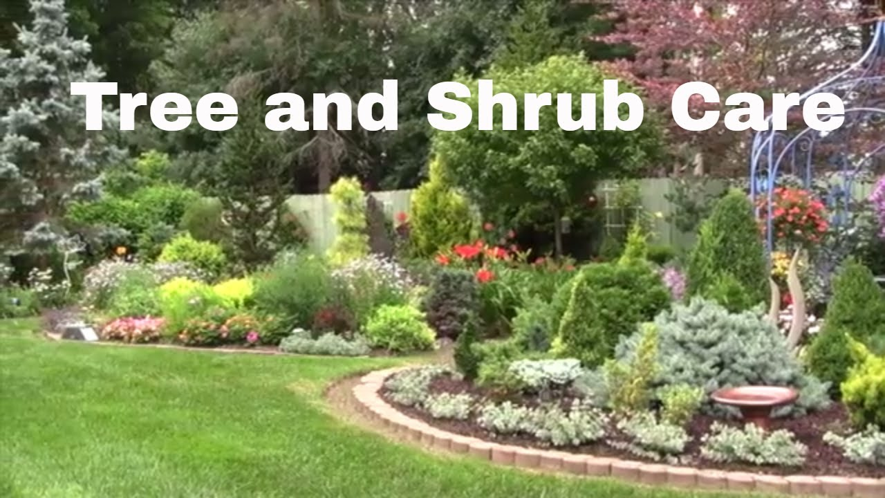 How To Keep Your Trees And Shrubs Healthy You