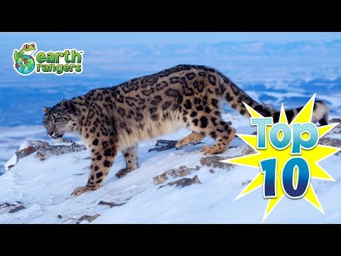 Top 10: Ways Animals Enjoy the Winter