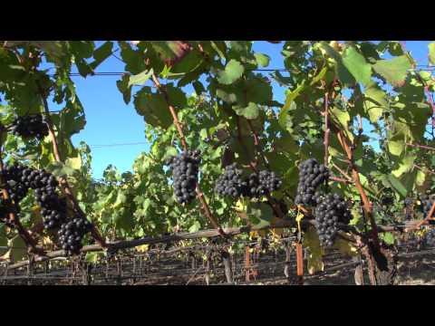 ¡Salud! The Oregon Pinot Noir Auction 2012