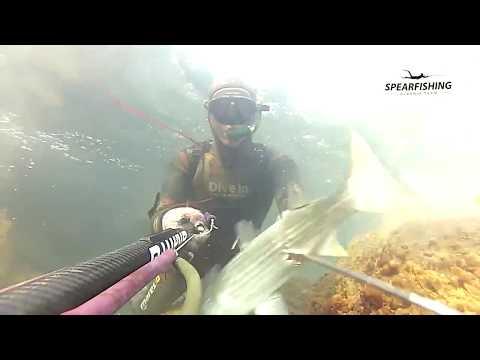 Spearfishing Albania - Redon Gjermeni - peshkim nenujor pesca sub chase sous marine
