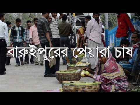 Guava Cultivation Of Baruipur Documentary