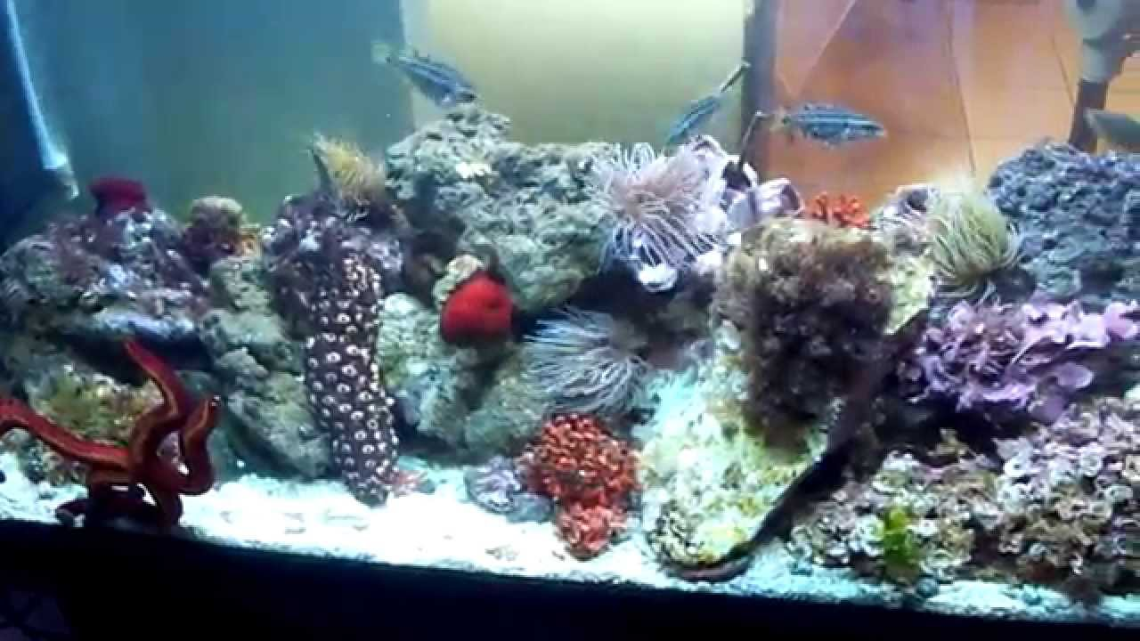 Acquario marino mediterraneo 04 07 2010 francesco youtube for Filtro acquario fai da te