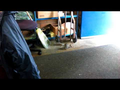 part three squirrels and a custodial office at Mountain View High School