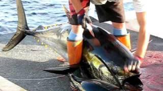 bigeye tuna 100kg+