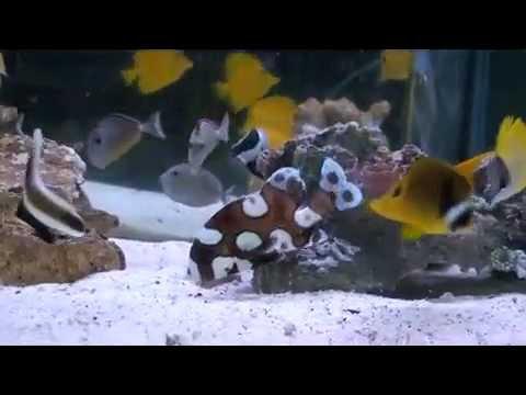 Marine Aquarium Shop
