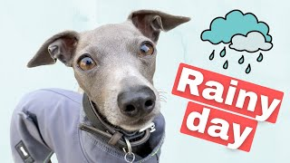 VLOG: Walkies on a RAINY day? Ew!