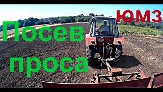 видео Просо на зерно