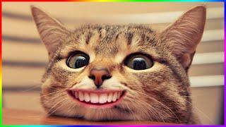 Я РЖАЛ ЦЕЛЫЙ ЧАС / СМЕШНЫЕ ЖИВОТНЫЕ 2020 / КОТЫ 2020 ПРИКОЛЫ С КОТАМИ Смешные Кошки и Коты