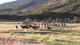 CABALLOS SALVAJES  2014 TORRES DEL PAINE - WILD HORSES PATAGONIA