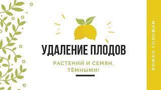 Удаление плодов, растений и семян, тёмными!