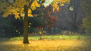 Листья падают( исп.В.Харламов).mpg
