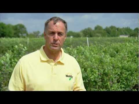 Florida Blueberries - America's Heartland